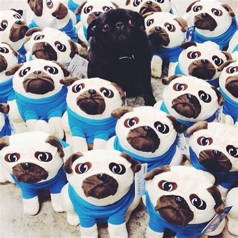 pug stuffed animal outfitters discover and save creative ideas