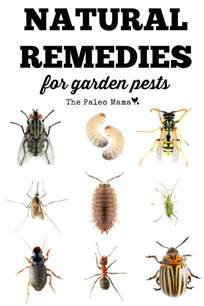 Natural Pest Control For Vegetable Gardens - natural remedies for garden pests the paleo mama
