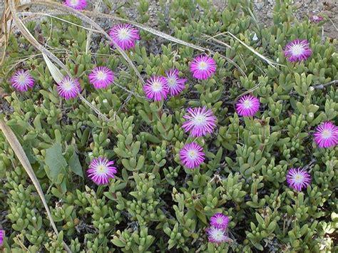 piante grasse fiorite da esterno piante grasse senza spine piante grasse da appartamento