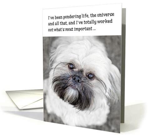 Shih Tzu Birthday Card Funny Birthday Card Shih Tzu Pondering Life And The