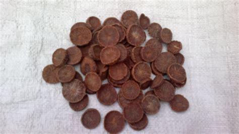Jual Biji Sawi Hitam spices rempah ratus selamat datang ke
