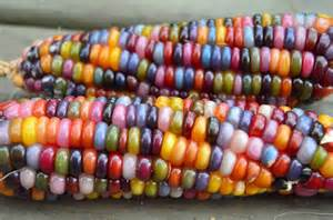 rainbow corn makes for a colorful cob foodiggity