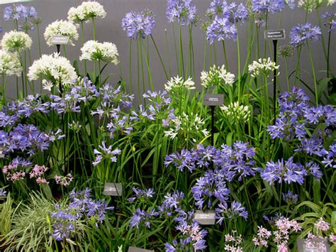 small garden flowers flower garden design ideas