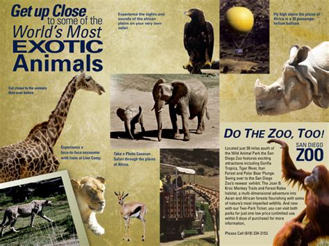 Zoo Brochure Template by Matthew Dow Graphic Design San Diego Zoo S Animal