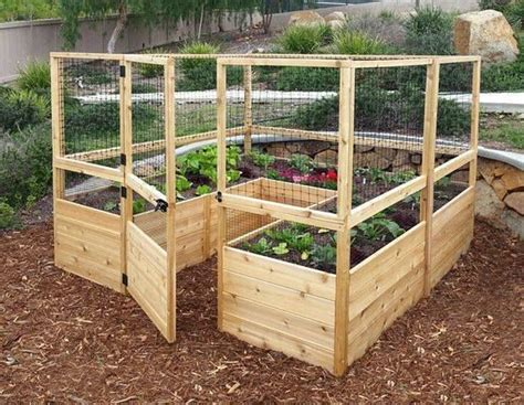 enclosed vegetable garden  raised beds pictures