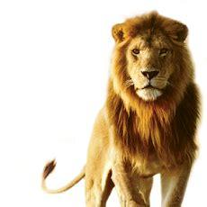 gambar harimau format png gambar tribal singa free download clip art clipart