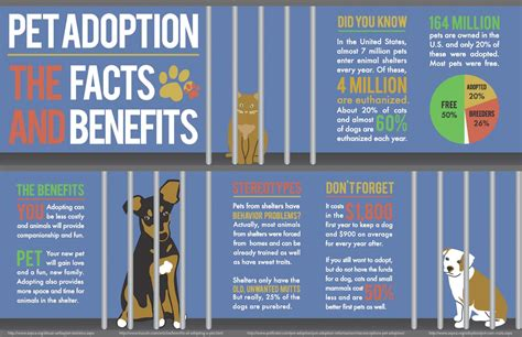 adoptable dogs pet adoption the facts and benefits visual ly