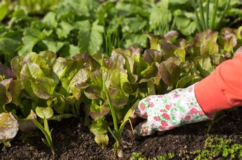 astuces et conseils de jardinage pour le mois de septembre