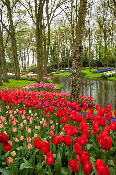 68 Best Keukenhof Images On Pinterest Netherlands The Flower Garden In Amsterdam
