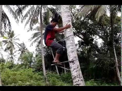 alat pemanjat pokok kelapa alat panjat kelapa