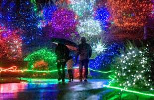 crowne plaza portland downtown events zoolights at the