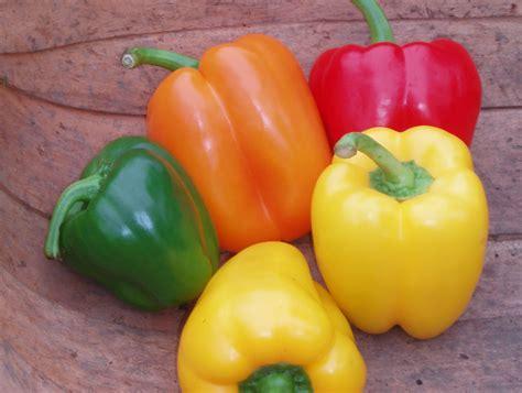 Vegetable L by Vegetable Garden Sevenoaks Kent