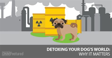 Best Detox For Dogs For Heavy Metals by Heavy Metal Detox For Dogs Why It S Important Dogs