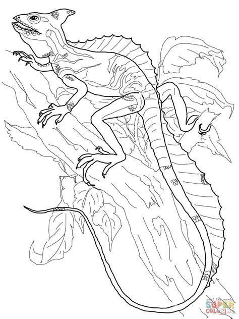 anole lizard coloring page coloriage basilic 224 plumes coloriages 224 imprimer gratuits