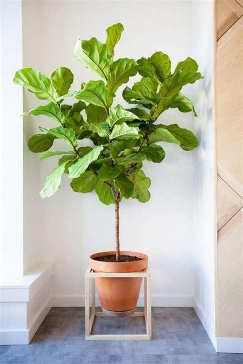 indoor plants beautiful plants for amazing indoor wonderful ways to display indoor plants the owner