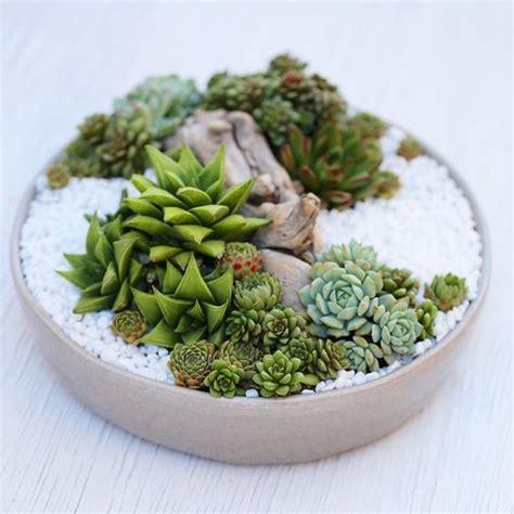 dish garden ideas dish garden succulents and zen on