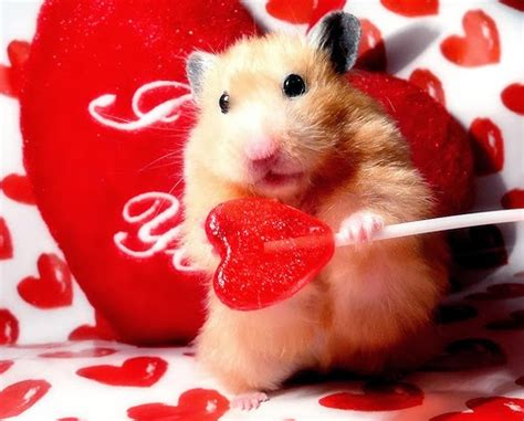 valentines day animals s day animals animals