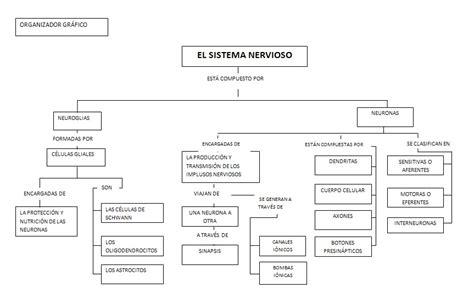 clasificacion de las cadenas musculares pdf en armon 205 a con la ciencia