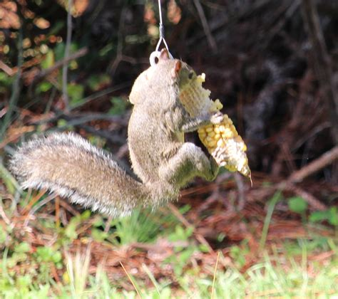 squirrel feeder keep squirrels away from bird feeder