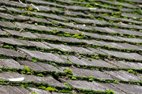 why do i cycles on my roof why is moss growing on my roof and how do i stop it
