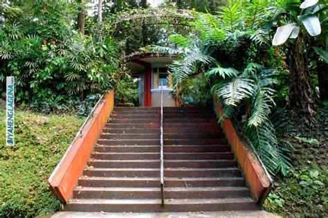up los banos botanical garden uplb botanical garden makiling botanic gardens up los ba