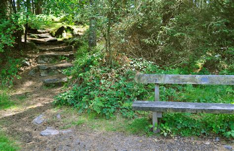 bench in forest the steps to the forest bench by forestina fotos on deviantart