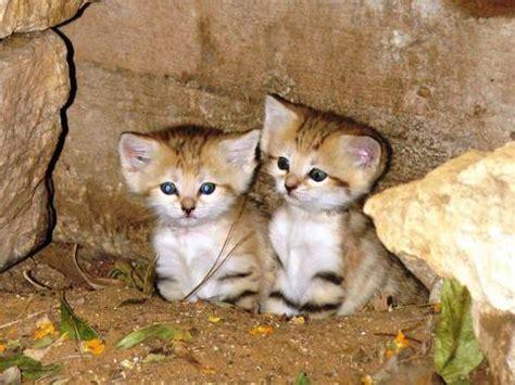 heart melting photo newborn sand kittens blink