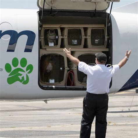 Delta Airlines Pets In Cabin by Southwest Airlines Fee For Dogs