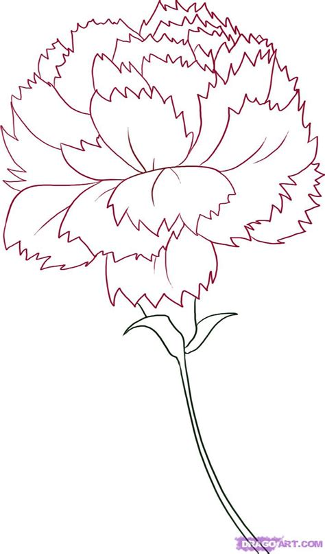 how to draw a carnation step by step flowers pop