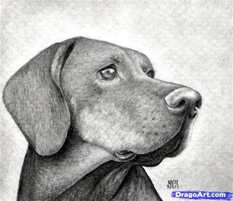 Drawing Dogs by How To Draw A Step By Step Realistic
