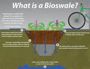 how is a what is a bioswale and how is it useful for rainwater