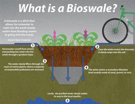 what is sectioning what is a bioswale and how is it useful for rainwater