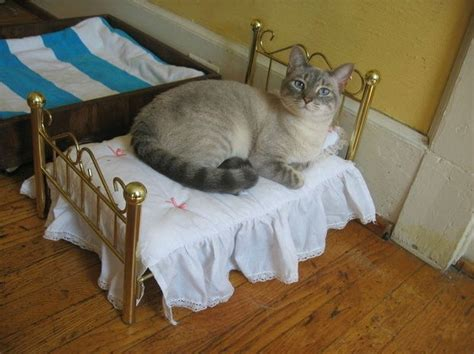 10 pictures of cats laying in miniature beds weknowmemes