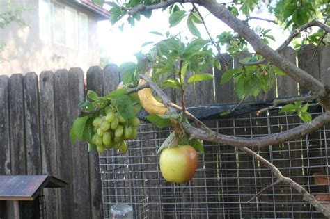 salad fruit tree images