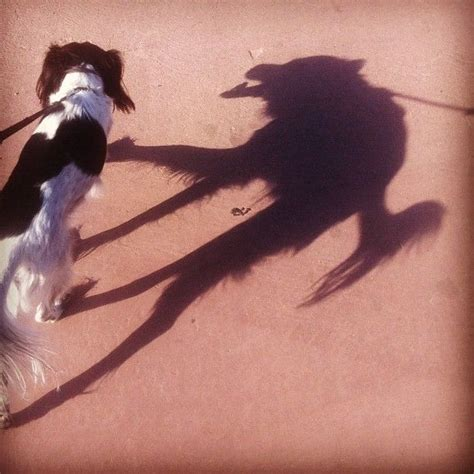 my old dog keeps peeing in the house dog with wolf shadow natural history