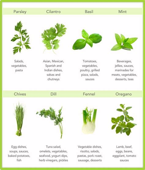 one ash plantation homestead perennial herb chart i have en que podemos usar las hierbas perejil cilantro albahaca