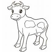 Baby Cow Coloring Page  SuperColoringcom
