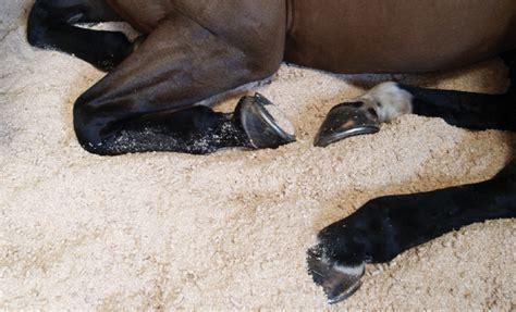 bedding horses bedding sorbeo