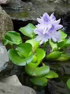 Flower Container Gardening - a trip to soni s garden garden drama
