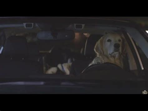 subaru commercial golden retriever 17 best images about subaru commercials on barking inference and subaru