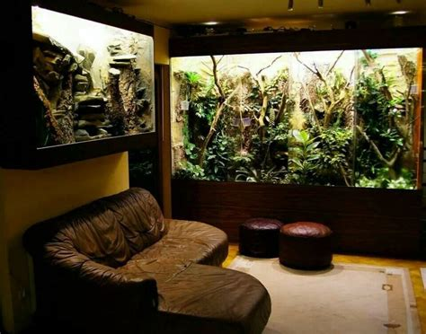 Reptile Rooms by 86 Best Images About Animal Reptile Room On Iguana Cage Bearded Enclosure