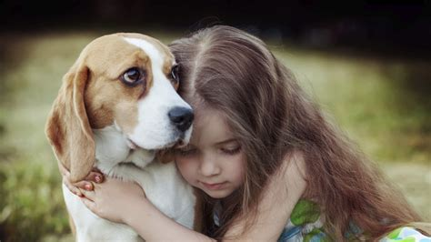 hugging dogs let s not hug it out with our dogs npr