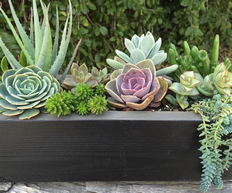 planter for succulents rustic chalkboard planter box by succulent charm succulent