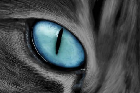 Cat Eye Blue Berkualitas cat s eye closeup by drawswithapc on deviantart