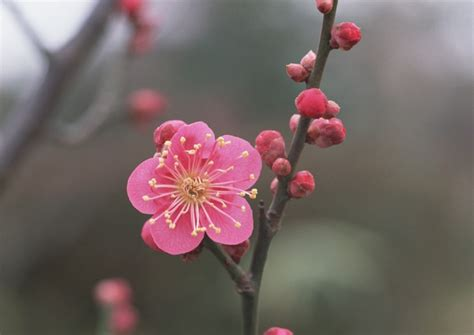 10 beautiful japanese flowers and their meanings tsunagu