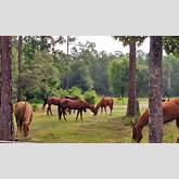 haven horse ranch is a nonprofit working horse ranch in beautiful st ...