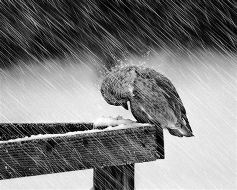 images of love birds in rain how do i find shelter in a storm of life how do i survive
