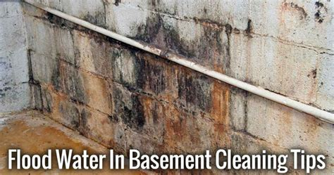 basement flood cleanup tips allergyconsumerreview