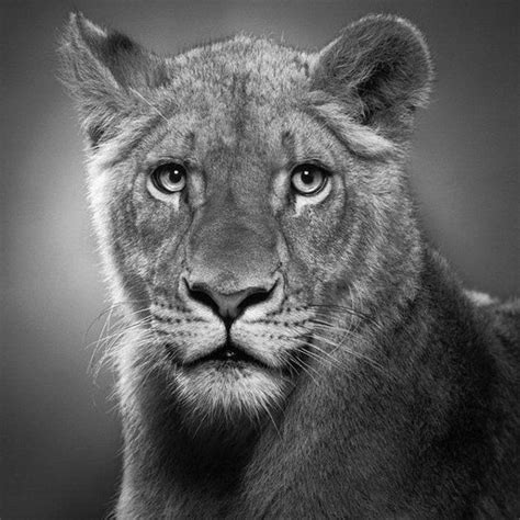 imagenes hechas a lapiz de animales imagenes de dibujos de animales a lapiz imagui