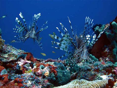 foto dive maldives liveaboard dive spa 201 lite diving agency